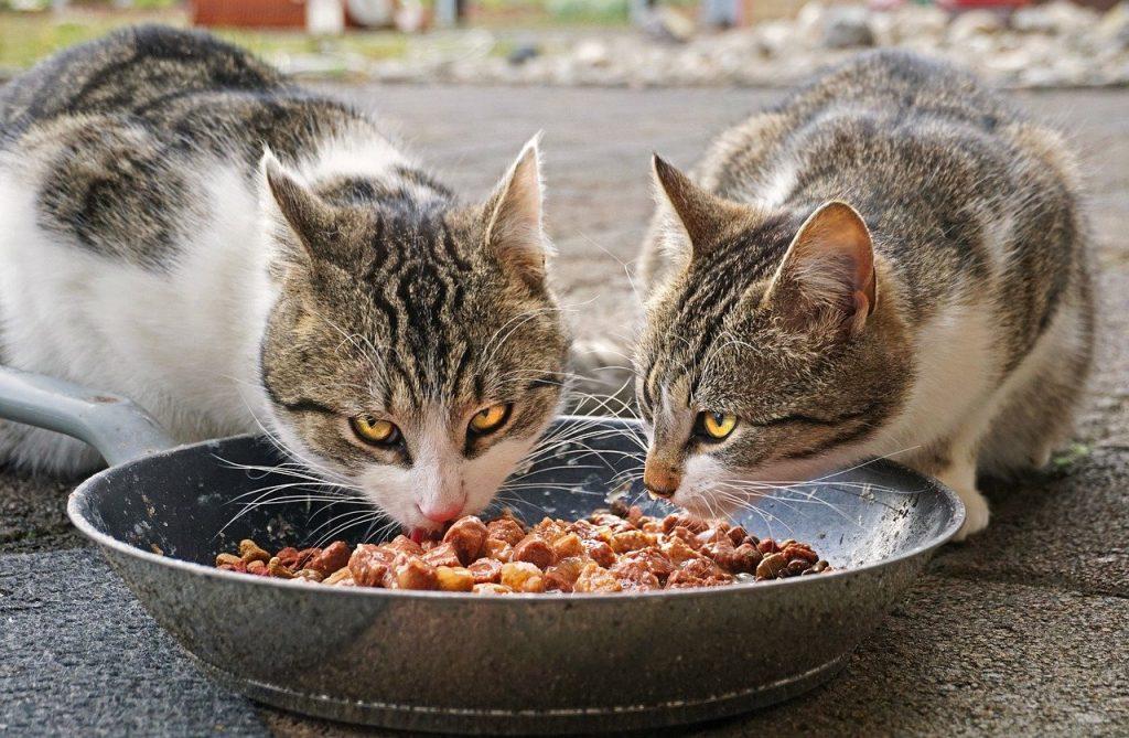 cosa mangiano i gatti?