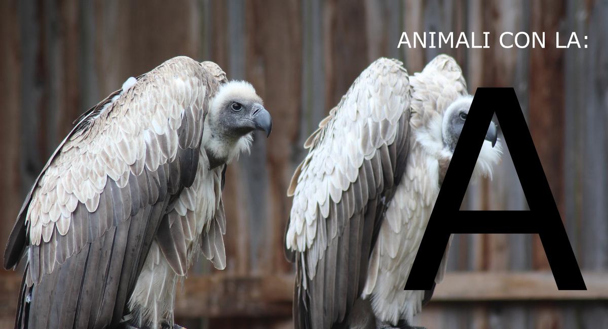 animali con la a