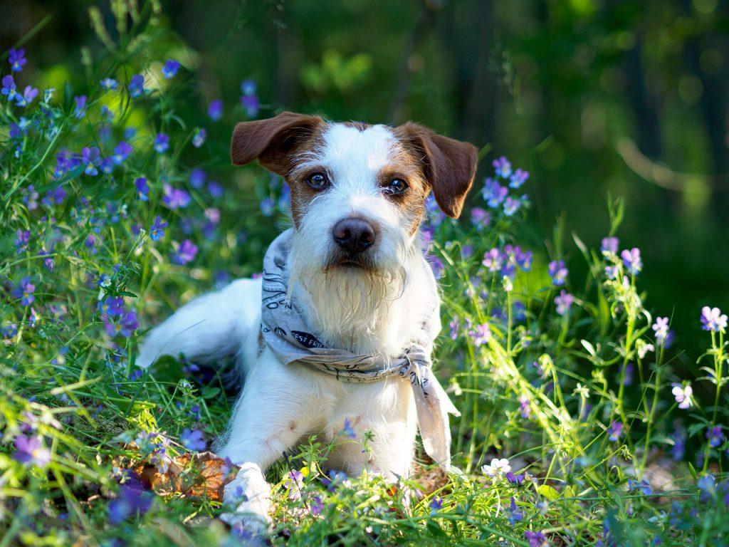 kromforhlander cani tedeschi cani da appartamento
