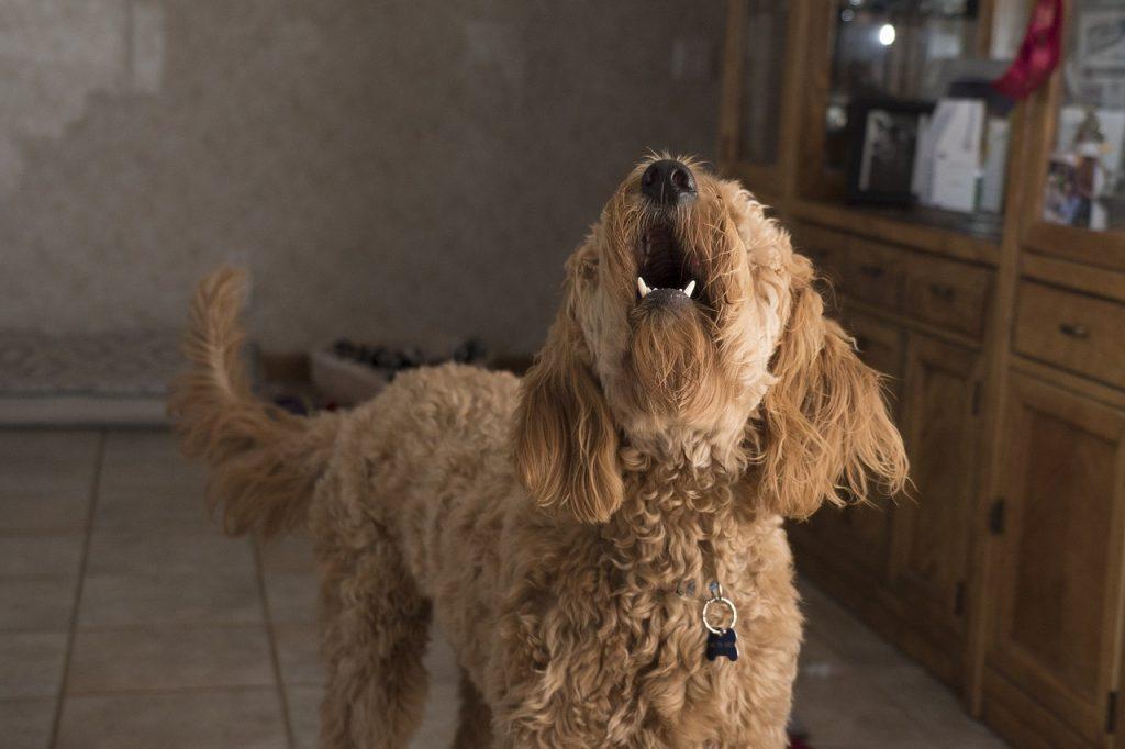 cane stressato che abbaia