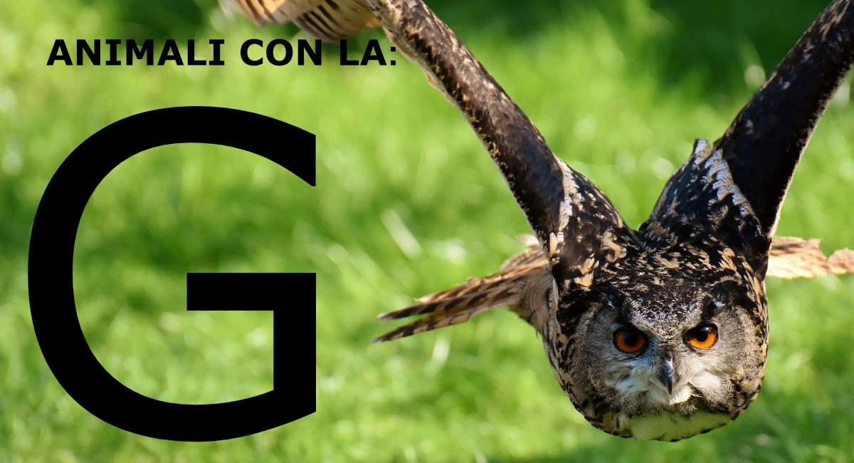 Animali con la G