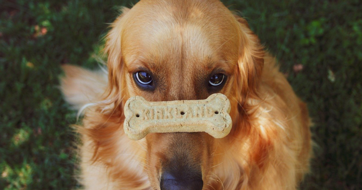 Biscotti per cani: ecco le ricette