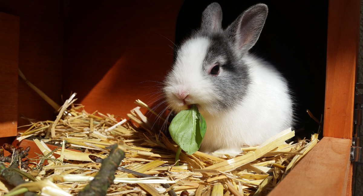 cosa mangiano i conigli