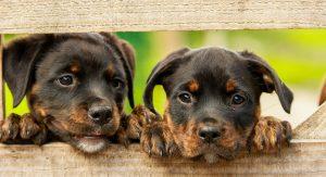 quanto costa sterilizzare un cane