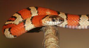 cosa mangiano i serpenti