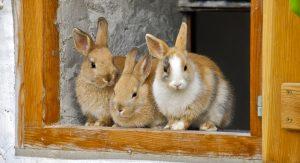 quanto costa un coniglio nano