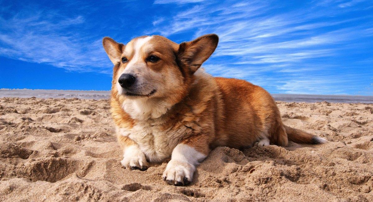 I cani possono andare in spiaggia?