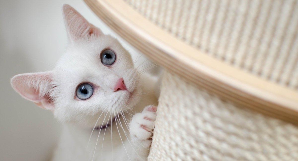 sverminazione del gatto